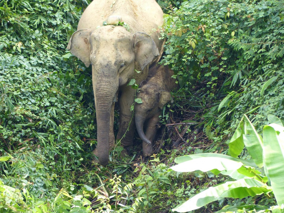 an elephant and her child