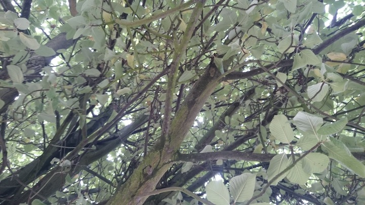 looking up through the branches of a tree in the car park to do human sensing